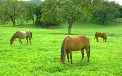 Votre cheval au printemps